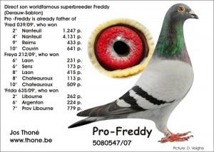 Pro Freddy